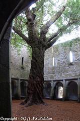 A tree in a church (NoStress.Rohdan) Tags: album famille irlande irland irish landscape paysage