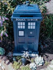 The Police Box Letterbox (Steve Taylor (Photography)) Tags: policebox publiccall 35 kiosk miniature model blue green mauve pink garden newzealand nz southisland canterbury christchurch cbd city blossom succulent shadow sunny sunshine drwho doctorwho tardis