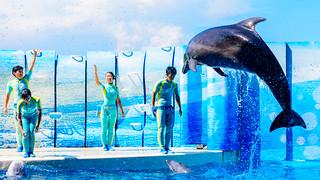 Jump! At the Dolphins and Sea Lions Show of Enoshima Aquarium, Fujisawa : イルカとアシカのショー(新江ノ島水族館)