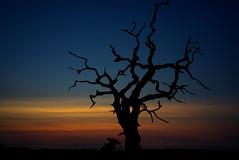Sunset last night (EricMakPhotography) Tags: tree sunset dusk art desert