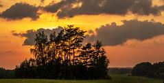 Sunset (Sarunas Sabaitis) Tags: lithuania summer ignalina sunset trees evening landscape clouds lietuva grass nature outdoors tranquility sky