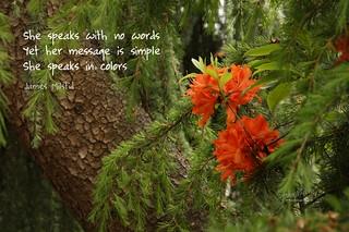 226/365 - Daily Haiku: Colors
