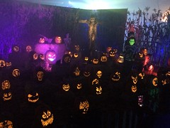 Lots of pumpkins and scarecrow pumpkin patch (JacksonSha) Tags: wickedpumpkinhollow pumpkin patch jackolanterns creatures midsummer scream halloween horror convention 2018 scarecrow skeleton spooky carvings sherman oaks