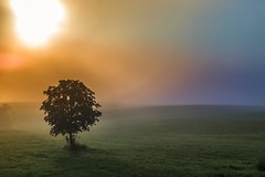 Morning mists on the way to Mokronog (rlubej) Tags: mirnskadolina dolenjska fog mistique mist colors dreamscape sunrise trees