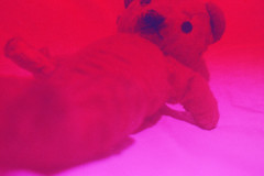 (Chris Hester) Tags: 21 169p baildon west lane attic toy big ted teddy bear purple red