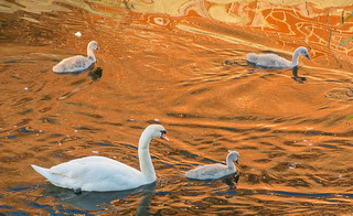 Family outing on the Wensum