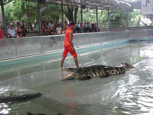 В пащу крокодилу Паттайя Таїланд Thailand InterNetri 09