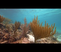 kissing fish (brian eagar - very busy - not much time to comment) Tags: fish snorkel grandcayman swim wild wlidlife nature ocean caribbean