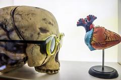 Hearts & Minds (Los Paseos) Tags: museum pennypicklesworkshop temecula california display skull heart art