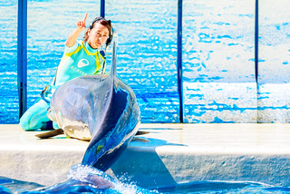 Let's do it once more! At the Dolphins and Sea Lions Show of Enoshima Aquarium, Fujisawa : イルカとアシカのショー(新江ノ島水族館)