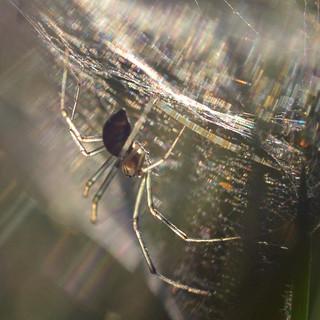 Wednesday scatterweb {explored}