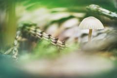 (a└3 X) Tags: natur nature alexfenzl olympus outdoor color makro austria macro macrofotografie mushroom pilze fungi wildlife 3x a└3x