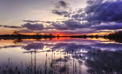 Sunset Colours (CraDorPhoto) Tags: canon6d landscape waterscape lake water reflection clouds sky colour reeds nature outdoors sunset sun horizon uk cambridgeshire