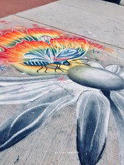 Bringing Color (Ellery Images) Tags: color elleryimages flower butterfly drawing chalk sidewalk art