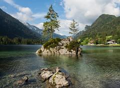 Hintersee (Lumen Candela) Tags: germany bavaria see sea hintersee baum tree rock landscape alpen alps morning morgen