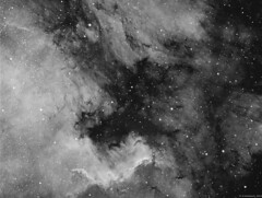 NGC7000 - Cygnus wall and Pelican Nebula (alastair.woodward) Tags: ngc7000 northamericanebula pelicannebula mono blackandwhite astronomy astrophotography stars hydrogenalpha sky night stargazing gas clouds longexposure skywatcher esprit80 triplet refractor as1600mmc 7nm baader zwo heq5 pro goto qhy