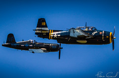 patrol of F4U-5N Corsair F-AZEG and TBM-3E Avenger HB-RDG (Florian GIORNAL) Tags: patrol chance vought f4u5n corsair fazeg tbm3e avenger hbrdg lsge aerodrome fribourg ecuvillens rio 23 appa rencontres internationales oldtimers 2018 avgeek aviation aviationphotography air aircraft spotting spotter swiss switzerland suisse warbird