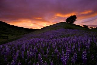 Southern California Wildflowers