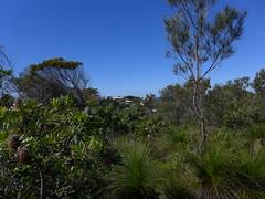Noosa Heads National Park (tanetahi) Tags: wallum heathland queensland coast sunshinecoast winter sclerophyll tanetahi
