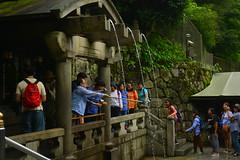 DSC_0037 (sxcxxhx) Tags: japan osaka kyoto hydrangea flower trip voyage 日本 大阪 京都 旅行