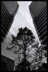 Tokyo Metropolitan Area: Impressions of a great city (Matthias Harbers) Tags: blackandwhite photo border classic japan photography impressions forest tree sky kashiwa chiba park nature animal wood grass spring walk building architecture panasonic dmctx1 photoshop elements topaz tokyo metropolitan lumix zs100 road car tz100 living bw black white monochrome city street life impression dxopro topazlabs photoshopelements