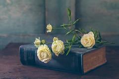 Blue(s) (Inka56) Tags: 7dwf macroorcloseup lagraella roses whiteroses blue book oldlens oldbook woodtable stilllife bokeh bokehpainting vintage