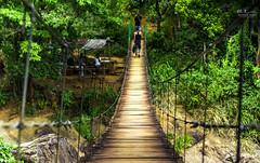 Bambarakiri Ella Suspension Bridge (Mohamed Rimzan) Tags: srilanka bambarajiri ella travel tour photography canon canon77d tourism bridge green nature photograph wide angle lens landscape relax jungle waterfall river