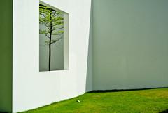 Baum im Raum (siegBERT Hufschmidt) Tags: baum wiese skulpturenpark köln