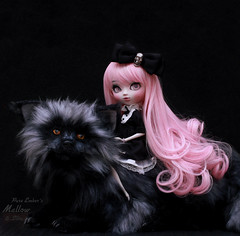 Pink froth (pure_embers) Tags: pullip optical alice semicustom edelwen doll dolls uk england laura pink hair pure embers pureembers junplanning japan girl beautiful beauty opticalalice mallow photography silva silverfox thecharmedlanddolls fantasy dark portrait photo