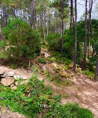 😊Good Morning 😊😘 😊 Seek our a tree and let it teach you stillness 🌳🌲🌸 😊😊😘have a lovely day 😊😊 (paulacjcpalma) Tags: mountain sintra track florest nature
