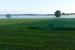 Mist lies over the moss. With stork. (Stinux) Tags: moos moss morning morgen nebel morgennebel mist