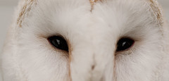 If you could see through my eyes (A child in the night) Tags: eyes seeing sight vision barnowl view