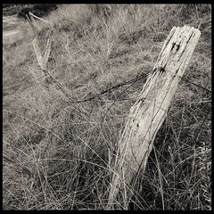 More Posts (Alex . Wendes) Tags: post posts grass fence tokina1116mm tokina1116 d7000 nikond7000 blackandwhite digitaltoned