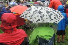 umbrellas 8 c