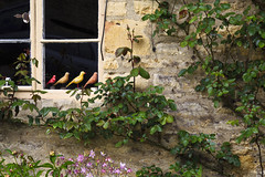 Perch (Boganeer) Tags: minsterlovell ivy window perch brick birds carving england uk unitedkingdom canon canoneos canon6d cottage cotswolds oxfordshire