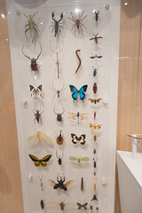 Collection of insects (quinet) Tags: 2017 canada ontario rom royalontariomuseum toronto museum musée naturalhistory 124