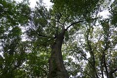 DSC00562 (boatmon0) Tags: trees maumellepark arkansasriver