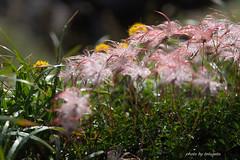 DSC05723 (tetugeta) Tags: mountain nature landscape nippon japan