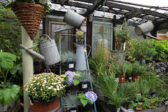 Alexandra Nurseries Penge (Adam Swaine) Tags: penge gardens flora flowers england english south london garden naturelovers nature gardencentres uk cities beautiful cans canon summer