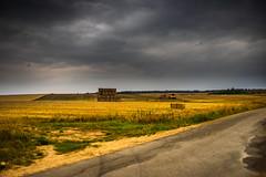 Rush before the rain (Guldbrand Rasmussen) Tags: vintagelens konicahexanon 35mm konicahexanon35mmf2 wheat crops farming farmlands summer