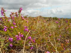 DSCN5729 (norwin_galdiar) Tags: bretagne brittany breizh finistere monts darrée nature landscape paysage