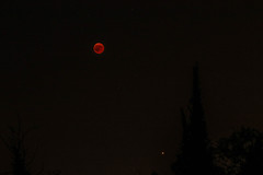 Red Moon (marcodalsasso1) Tags: redmoon red moon night stars eclipse eclissi torino superga igersitalia igerstorino igerspiemonte igerssuperga collinadisuperga canoneos7d