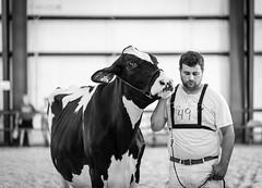 holstein (Jen MacNeill) Tags: cows cow cattle bovine dairy agriculture bnw blackandwhite boy 4h teenager show fair lebanonareafair farm animals his