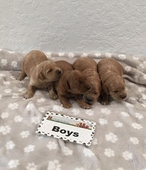 Gretta Boys pic 2 8-4