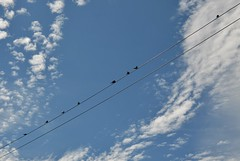 Plenty of room for more (simon edge) Tags: birds wire lines sky clouds nikon d5100 sigma 1750mm