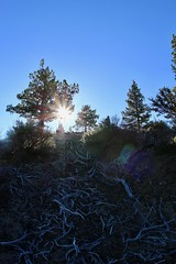 Lava Beds: Sun coming out from crater rim (daveynin) Tags: lavabeds light sun crater tree roots sky volcanic