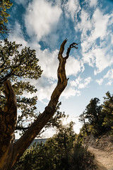 Zion 2018-029_ILCE-7RM3-16 mm-180528_180528-ILCE-7RM3-16 mm-184548__STA5098 (Staufhammer) Tags: sony sonya7riii a7riii sonyalpha sony1635mmf28gm sony1635mm sonygm sony85mmf18 zion nationalparks nationalpark zionnationalpark grandcanyon landscape alphashooters travel valley fire state park valleyoffire valleyoffirestatepark