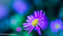 Summer droplet (frederic.gombert) Tags: water droplet pink light color colors summer sun macro nikon flower flowers portrait bloom blossom