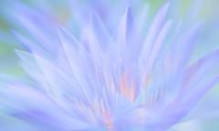 Paint My Love (Anna Kwa) Tags: waterlilies flower multipleexposure nature art artsciencemuseum singapore annakwa nikon d750 1050mmf28 my love paint colors always seeing heart soul throughmylens memories life journey earth fate round destiny wish rainbow mltr paintmylove 2013