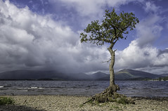 Millarochy Tree 01 (barry.young10) Tags: cloud weather tree lanscape landscape photography canon water loch lomond scotland